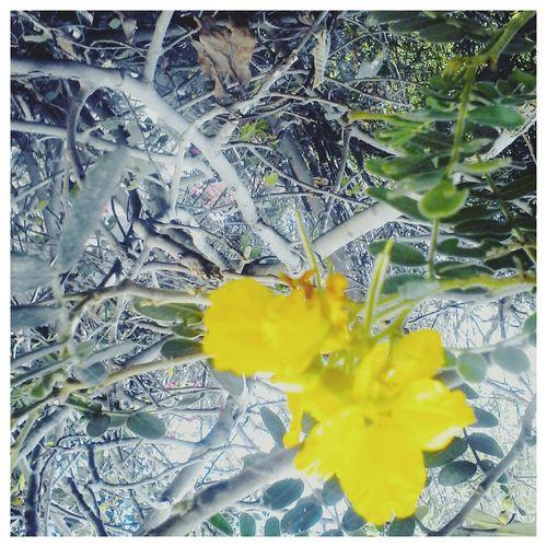 Quien te haya cortado los petalos en tu reciente primavera no esta enterado que habemos personas que tambien gustamos de flores en invierno First Eyeem Photo