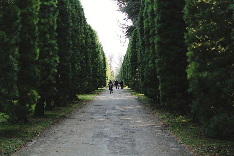 People amidst trees on footpath at park