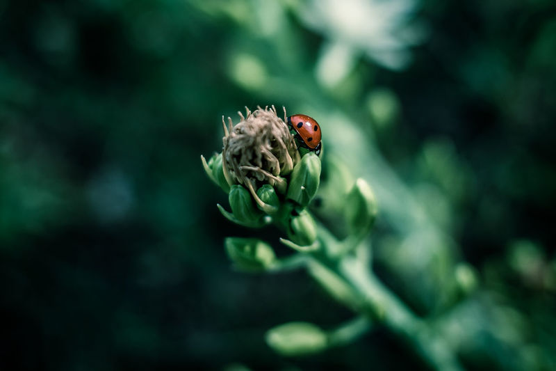 EyeEm Nature Lovers EyeEm Nature Lover EyeEm Nature Collection Nature_collection Nature Nature Photography Plant One Animal Animals In The Wild Animal Themes Beauty In Nature Animal Close-up Animal Wildlife Growth Flower Flowering Plant Invertebrate Insect Selective Focus Fragility Green Color Day No People Vulnerability  Outdoors Flower Head Pollination The Minimalist - 2019 EyeEm Awards The Great Outdoors - 2019 EyeEm Awards
