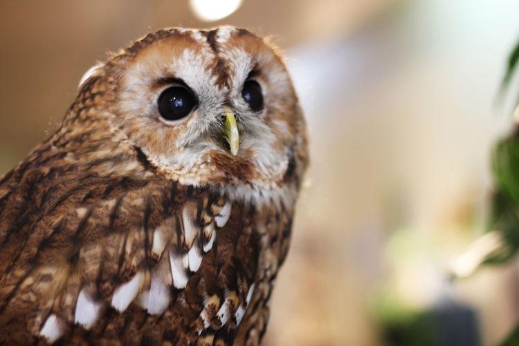 Owl looking meme