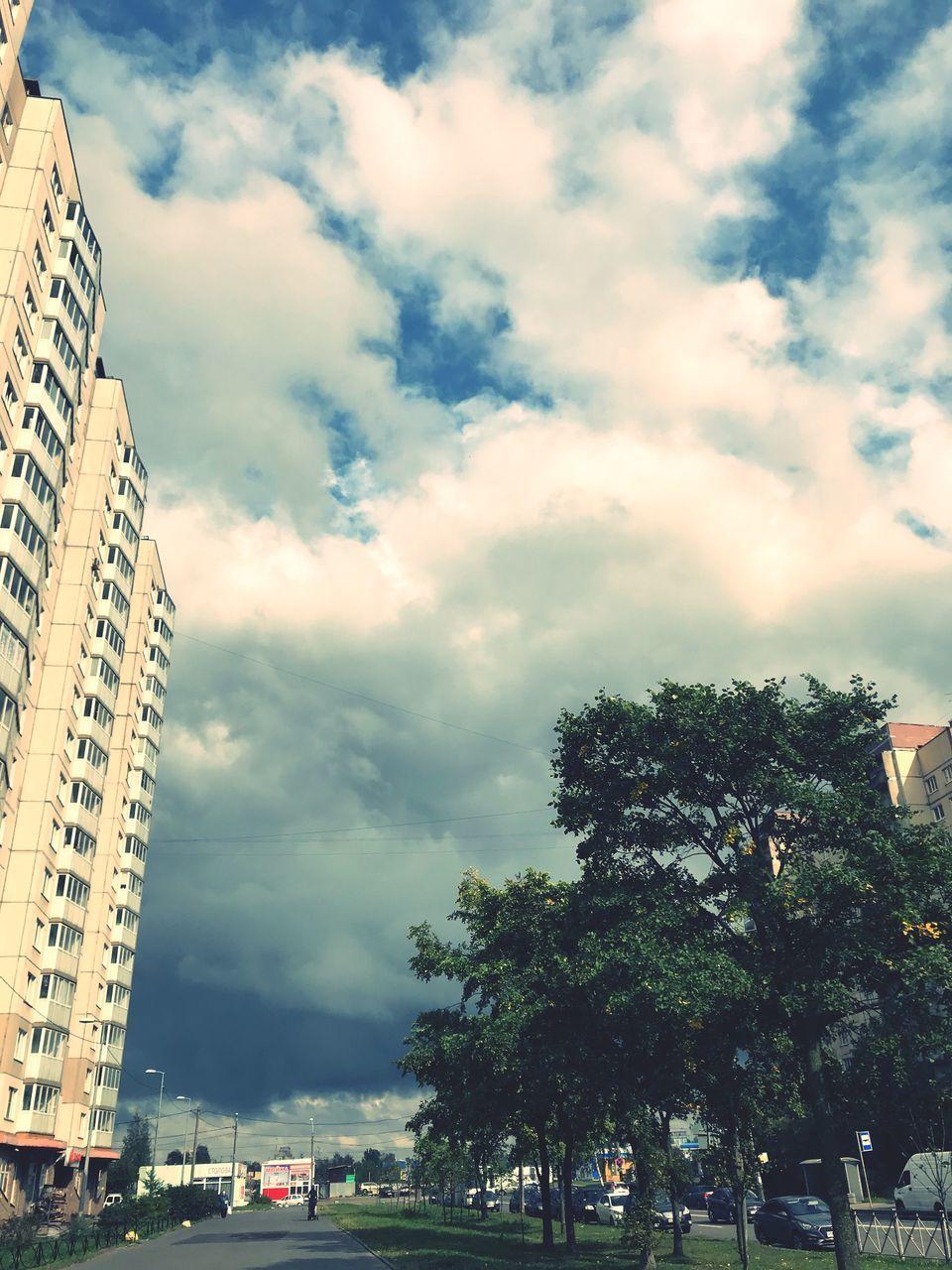 CITY STREET BY PALM TREE AGAINST SKY