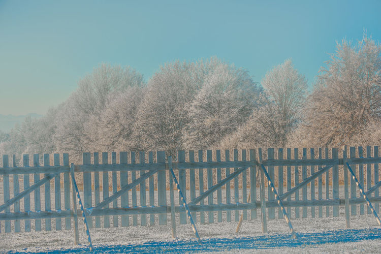 Bare Tree Beauty In Nature Clear Sky Day Fence Frog Nature No People Outdoors Picket Fence Sky Snow Guard Fence Tranquility Tree Water