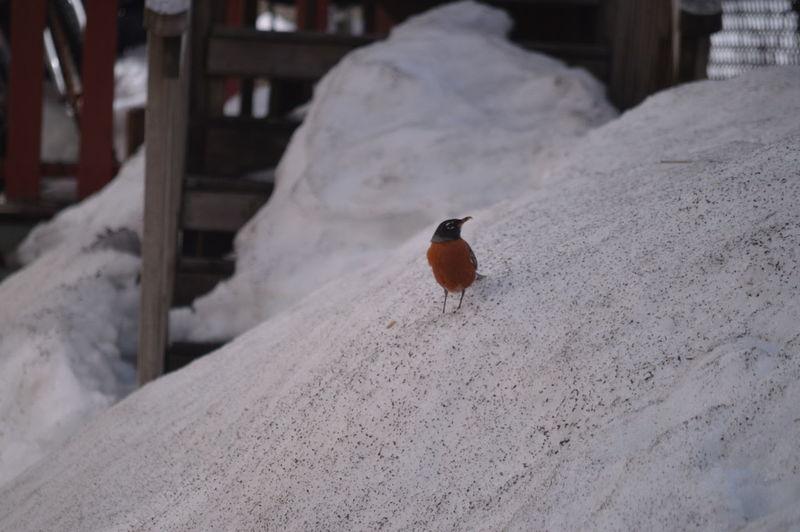 Bird on salt heap at factory