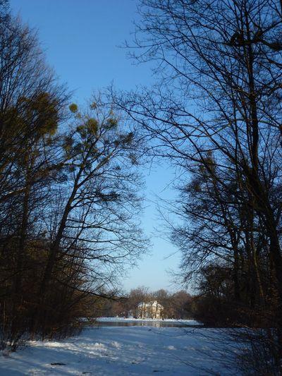 Badenburg Tree