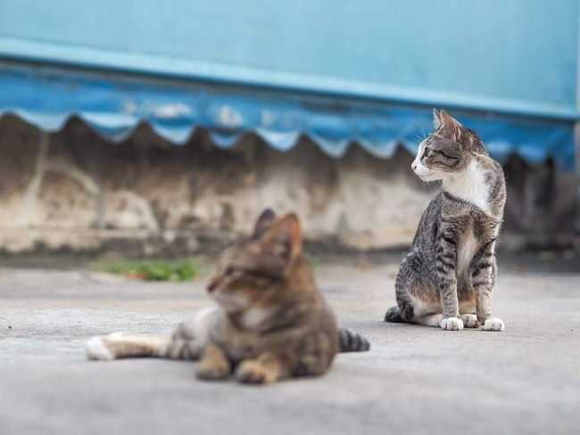 Animal Sitting Pets Animal Themes Nature Outdoors Beautiful Nature Cat♡ Cat Cat Lovers Cats Cats Of EyeEm Catsagram Cats 🐱 Cat Photography Catholic Catoftheday Animals In The Wild Animals Animal Photography Animals Lover Kittens Kitten 🐱 Kittenoftheday