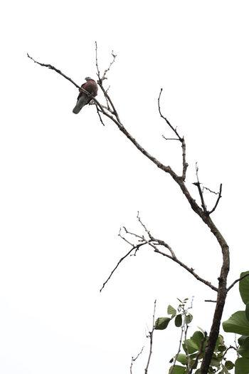 Bird On A Tree Bird On The Tree Bird And Tree Bird Bird Photography Animal Themes Animal Nature One Animal