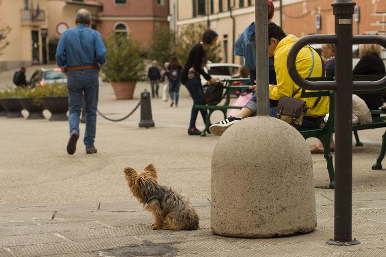 Cat on street in city