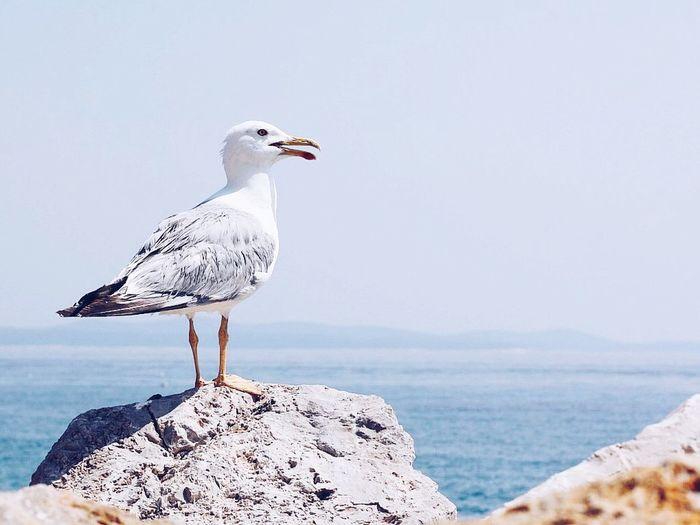 Seagull perching on rock