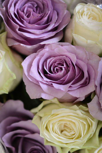 Close-up of fresh rose bouquet