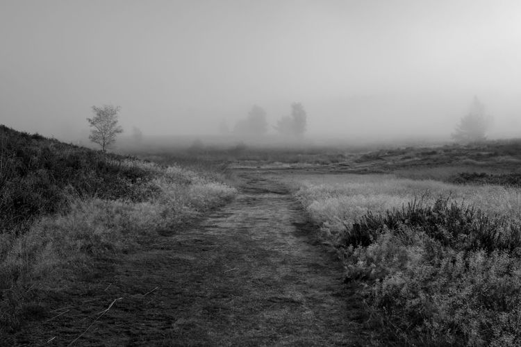 Celebrating the morning in the forests of The Veluwe, The Netherlands - Heath view Black And White Blackandwhite Blackandwhite Photography Fog Foggy Foggy Morning Forest Forest Photography Forestwalk Morning Morning Light Nature Nature Photography Nature_collection Naturelovers Tree Trees