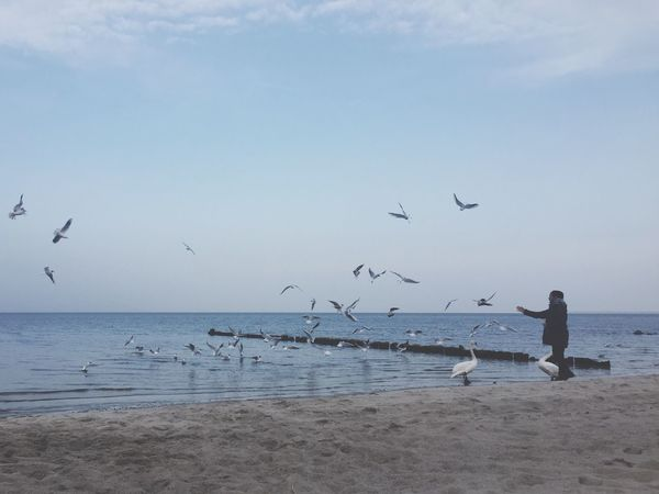 Horizon Over Water Animals In The Wild Bird Flying Sea Animal Themes Flock Of Birds Beauty In Nature Water Animal Wildlife Large Group Of Animals Nature Sky Outdoors Seagull Beach Beauty In Nature Idyllic Sand