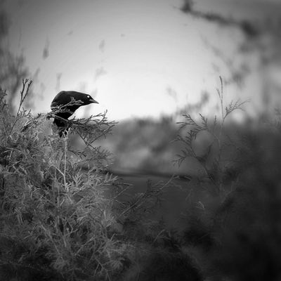 Blackandwhite AMPt - Shoot Or Die EyeEm Nature Lover EyeEm Best Shots