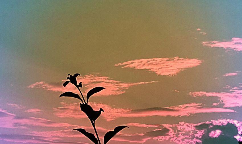 Summer Sunset Pink Summer Sunset Mooresvillenc Mooresville NC Beauty Beautiful Beautyinnature  Sky Clouds Clouds And Sky Silhouette