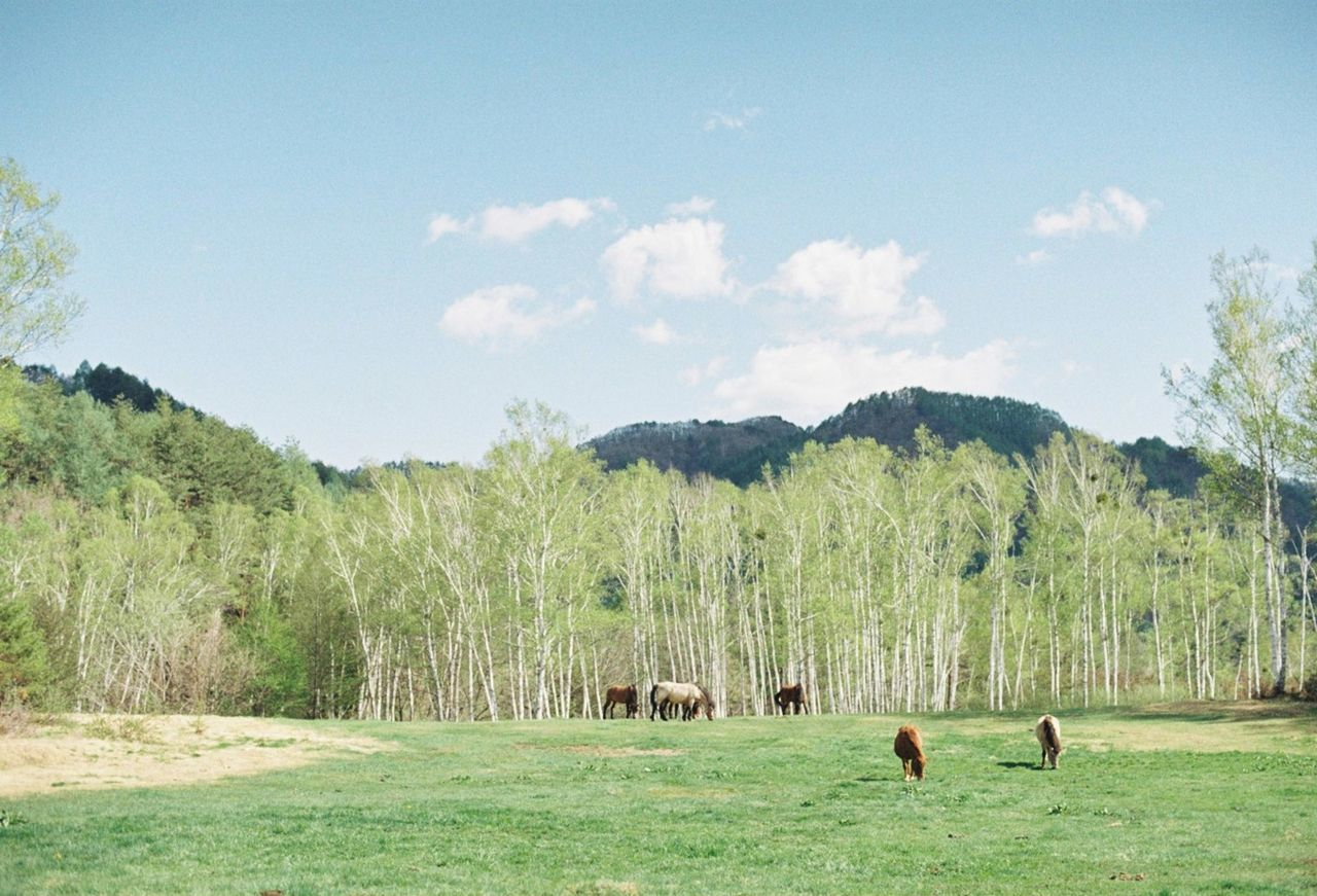 Horses grazing on field against trees and sky