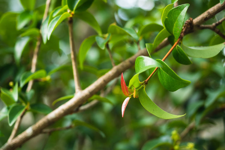 Close-up of plant growing on tree