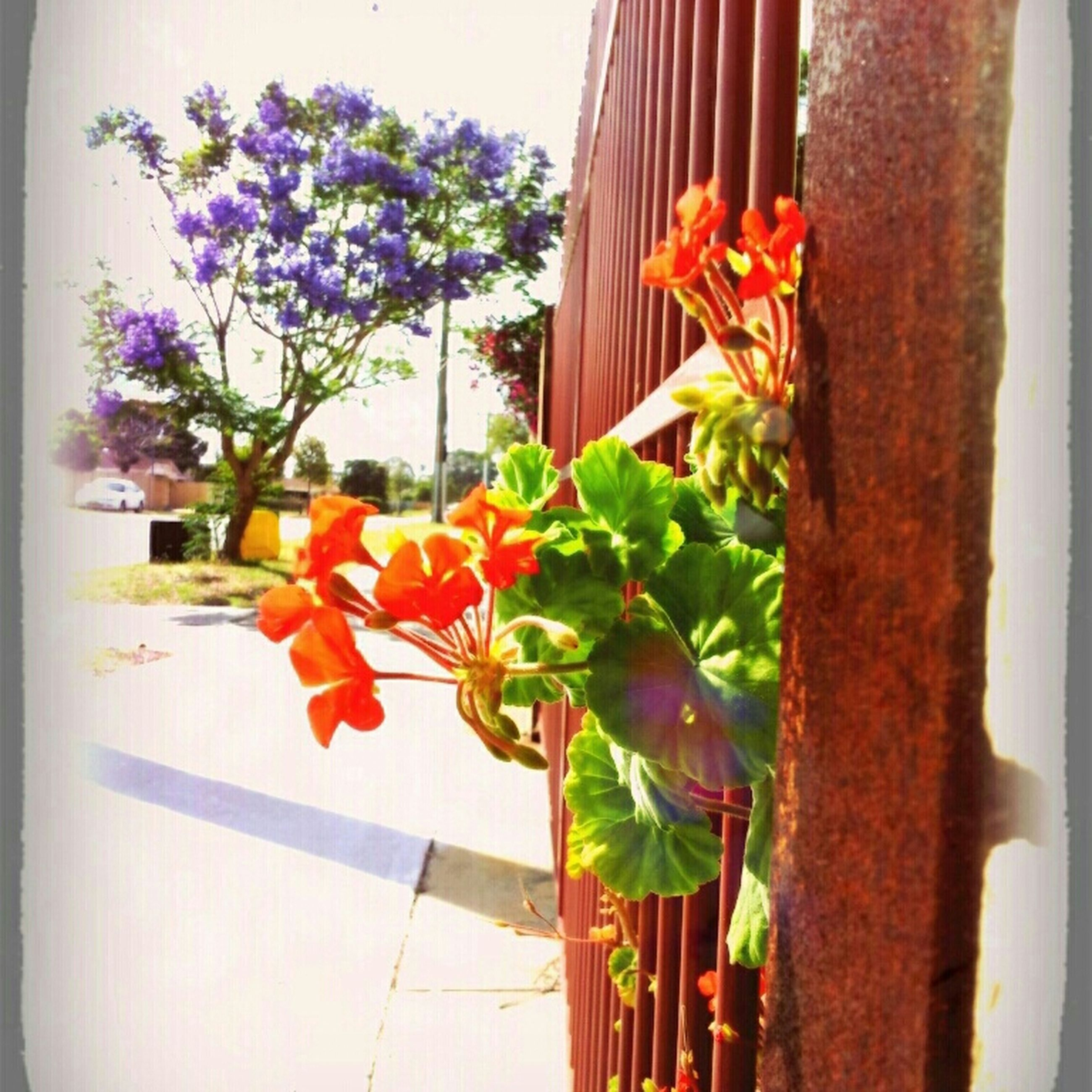 flower, growth, potted plant, freshness, plant, built structure, architecture, fragility, building exterior, petal, red, nature, beauty in nature, railing, flower pot, leaf, wall - building feature, close-up, house, day