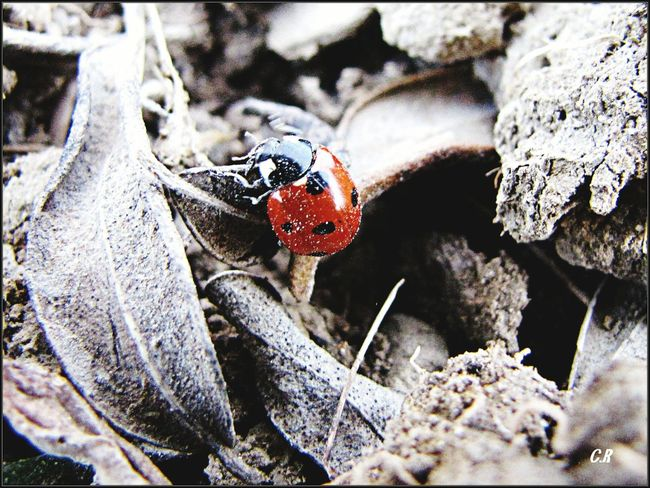 Taking Photos Insekt Animals Animal_collection Animal Photography Animallovers Goodluck EyeEm Animal Lover Cute Animals Animalsofinstagram