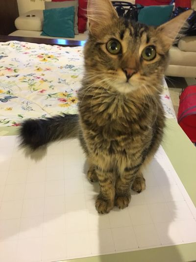 Gato😽 Animal Cat Domestic Cat Gata ♡ Pets