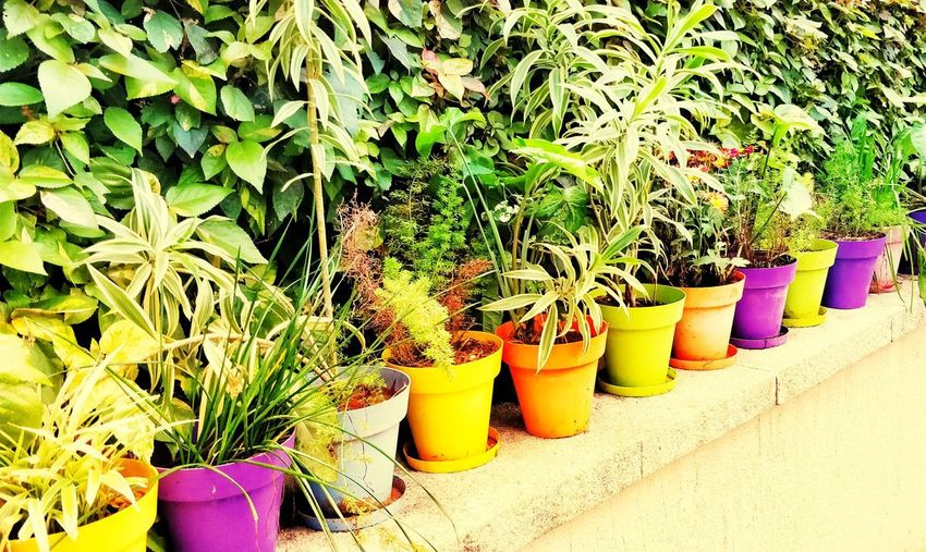Morning colors - Plants, Garden Morning Morning Light Morning Colours Color Colors Plant Plants Garden Garden Photography Backgrounds Nature Morning Nature  Early Morning Early Morning Light Early Morning Sunlight Colourful Color Portrait Bright Bright Colors Bright Morning