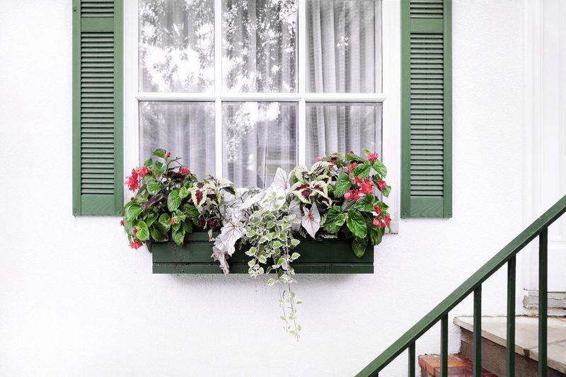 Niagara Falls Niagara On The Lake The Still Life Photographer - 2018 EyeEm Awards Still Life Photography Simple Beauty Simplicity Frame Landscape With Whitewall Architectural Detail Hand Rail Stairs Window Reflections Window Frame Plant Window Flowering Plant Flower Built Structure Growth Architecture Nature Building Exterior Wall - Building Feature Green Color Potted Plant Window Sill Leaf Freshness House