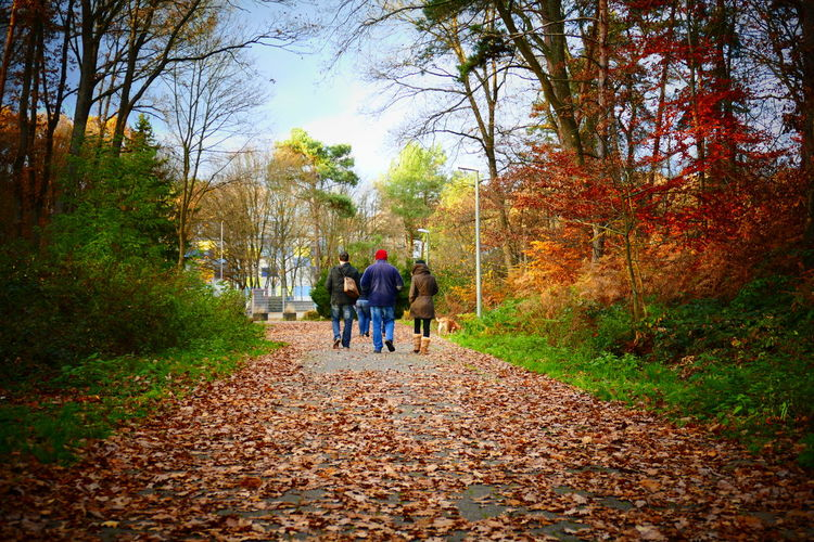 Adult Autumn Beauty In Nature Change Day Forest Friendship Full Length Landscape Leaf Nature Outdoors People Rear View The Way Forward Togetherness Tree Walking EyeEmNewHere