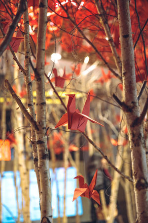 Branch Close-up Leaf Papercraft Red Tree