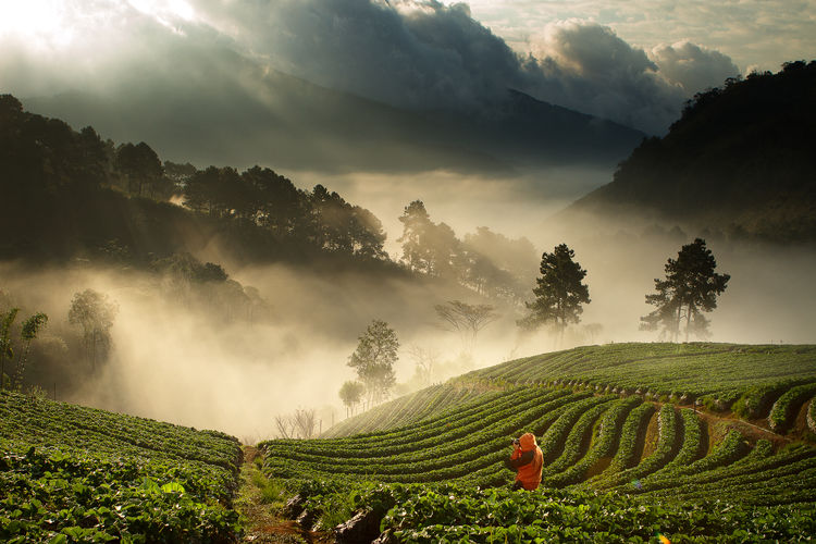 Agriculture Beauty In Nature Cloud - Sky Crop  Environment Farm Field Growth Land Landscape Mountain Nature Outdoors Plant Plantation Rural Scene Scenics - Nature Sky Tea Crop Tranquil Scene Tranquility Tree