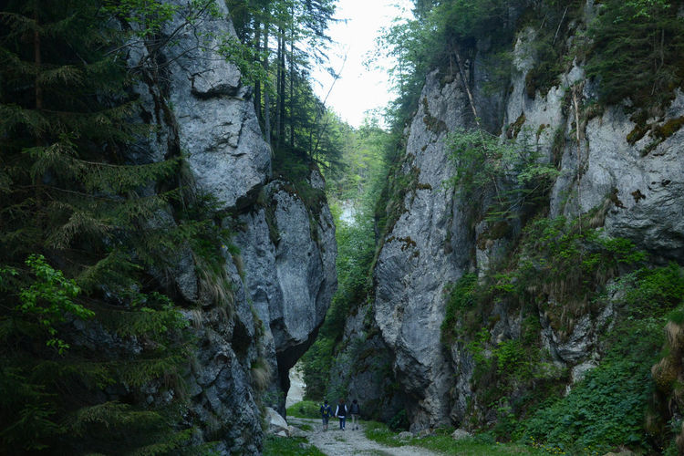 DEEP FOREST Gorge Transylvania Travel Photography Traveling Valea Cheii Beauty In Nature Greenness Hiking Trail Landscape Outdoors Piatra Craiului Rock Solid Tranquil Scene Remote Be Brave A New Beginning