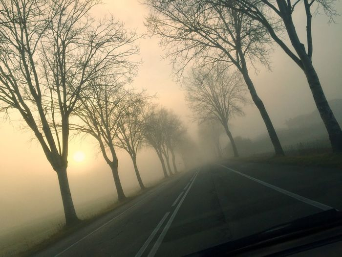 Road amidst bare trees against sky during foggy weather