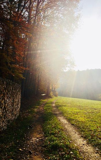 lonely way 🍂🙌🍃 Wienerwald  Meadow Grass Way Woodpile Wood Forest Trees Nature Autumn Tranquility Tree Tranquil Scene Beauty In Nature Sunlight Sunbeam Scenics Outdoors Landscape No People Day Growth Sun The Way Forward Rural Scene