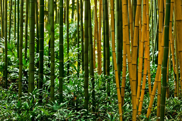 EyeEm Best Shots EyeEmNewHere EyeEm Nature Lover Bamboo Bamboo Forest Landscape Landscape_photography Lotus France France Photography Paysage Paysage De France Photography Photooftheday Photography Is My Escape From Reality!
