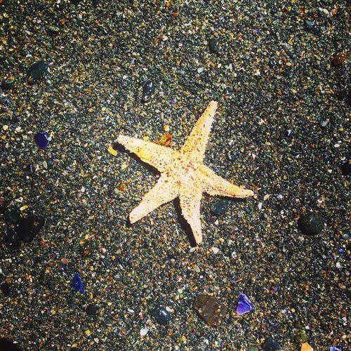 Denizler altında... Starofthesea