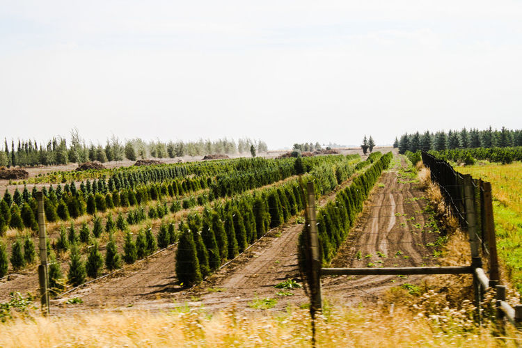 Rows of plants in field by fence