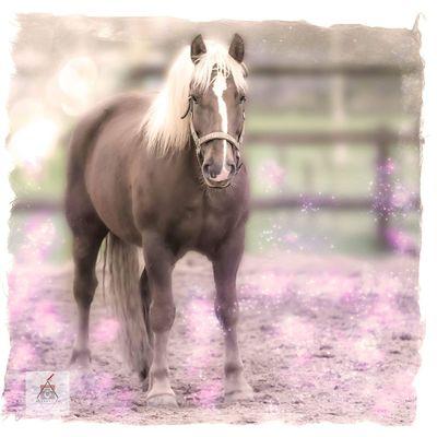 Horse Horselove SchwarzwalderFuchs Schwarzwalders Blackforest Chestnut Kaltblut Animal Themes