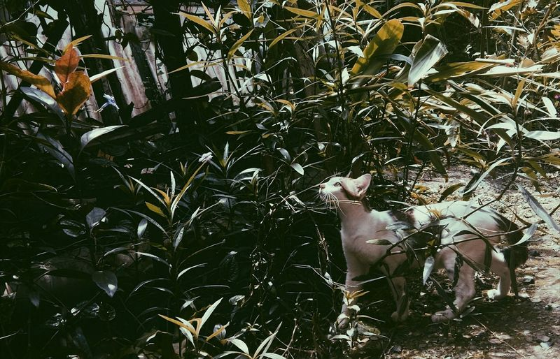 Cat Catlover Straycat Lightinthedark First Eyeem Photo