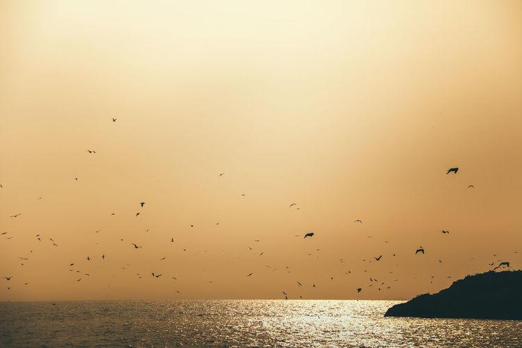 Birds flying over sea against sky during sunset