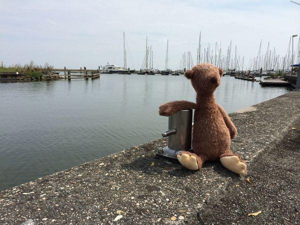 Greetings from the seaside Teddy Teddybear Teddy Bear Greetingcards The Week On EyeEm