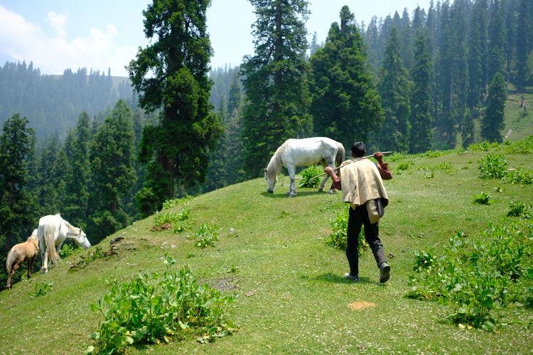 Mountain India
