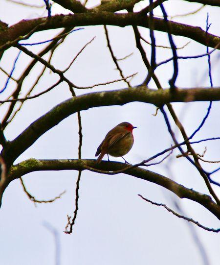 Bird Branch