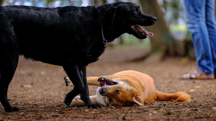 Black dog lying on land