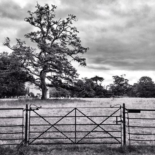 Iron Gate Simplistic Pictapgoapp Clouds Old Irongate Blackandwhite Lacockabbey Tree Cloudy Cloudporn Grass Iron Nationaltrust Pictapgo Lacock