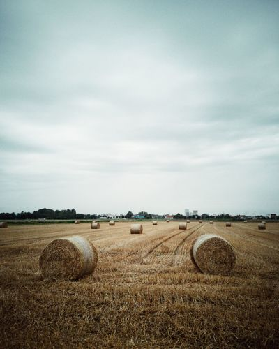 Fields in the summer morning Lanfscape Nature Check This Out Field Raw Huawei Huawei P20 Pro Walking Relaxing Sky And Clouds Sky Cereal Plant Hay Bale Rural Scene Agriculture Combine Harvester Field Wheat Hay Crop  Farm Bale  Tractor Rolled Up Agricultural Equipment Plowed Field Ear Of Wheat Harvesting Farmland Corn - Crop The Mobile Photographer - 2019 EyeEm Awards