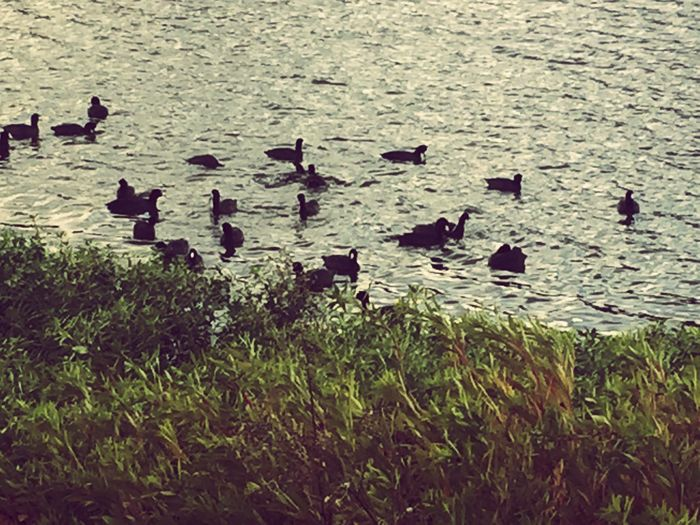 Just when I thought I had all my ducks in a row I discovered they were never my ducks