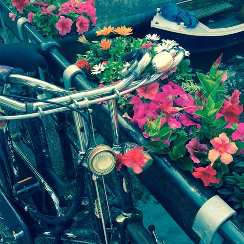 Beautiful Flowers and Handlebars along the railing of the Brouwersgracht Canal in De Jordaan Bikes Boat