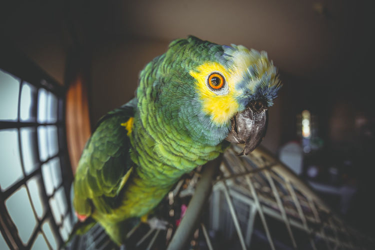 Close-up of parrot perching on cage at home