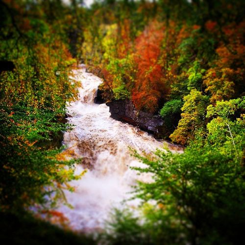 Another from Saturdays river walk FallsofClyde RiverClyde Scotland Waterfall Beautiful Countryside Green Orange Red Sun Autumn Scenery Trees NewLanark Lanarkshire nature natureza water naturelover countrylife countryview nature_shooters ig_scotland FallsofClyde View