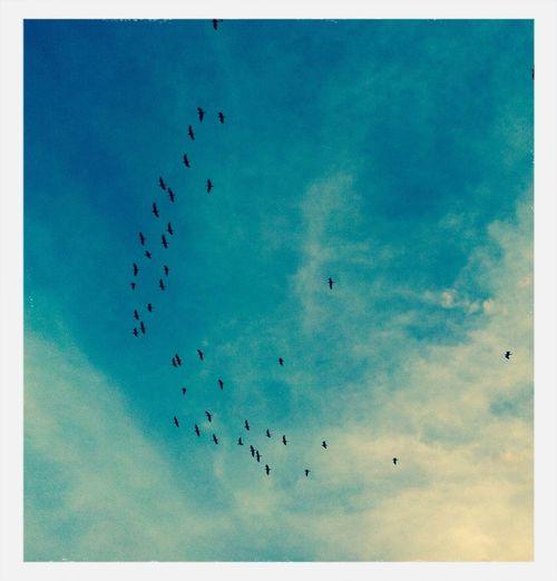 Las Garzas birds Clouds And Sky