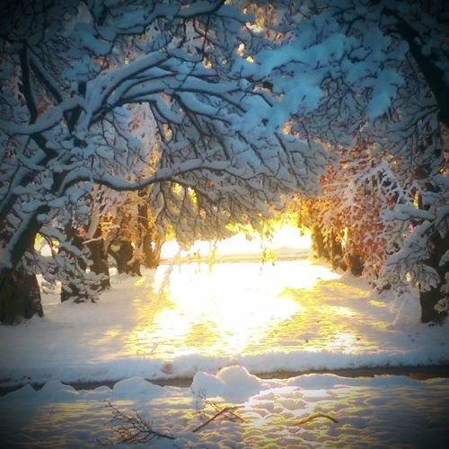Last year.. I love this picture.. Nature Check This Out Dramatic Snowing Whatscomingsoon Eye Em Nature Lover Eyeemwinter Eyeemcrystals Outside Photography Beautiful Nature Beautiful View Sun Light Shadow Shades Of Winter