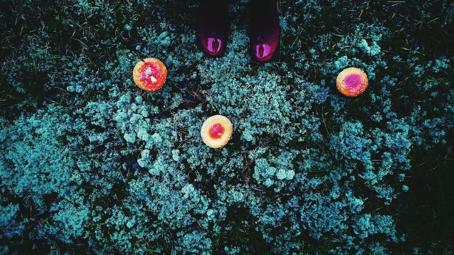 Nature Mushrooms Autumn Colors Red Boots Rany Day In The Forest Simple Things In Life Good Times Taking Photos