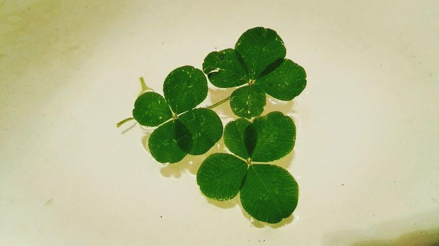 Luck Lucky